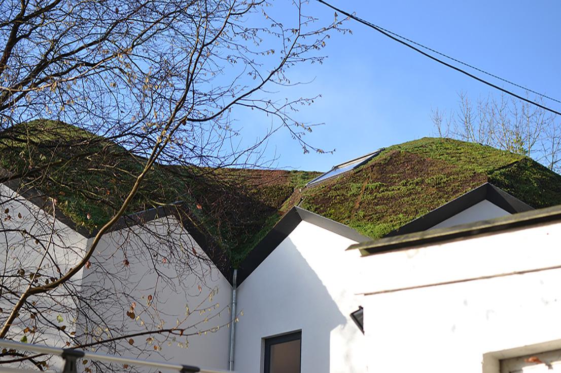 Un toit de verdure sur une maison